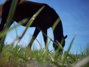 paard-onbekend